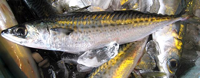 七尾魚商業組合