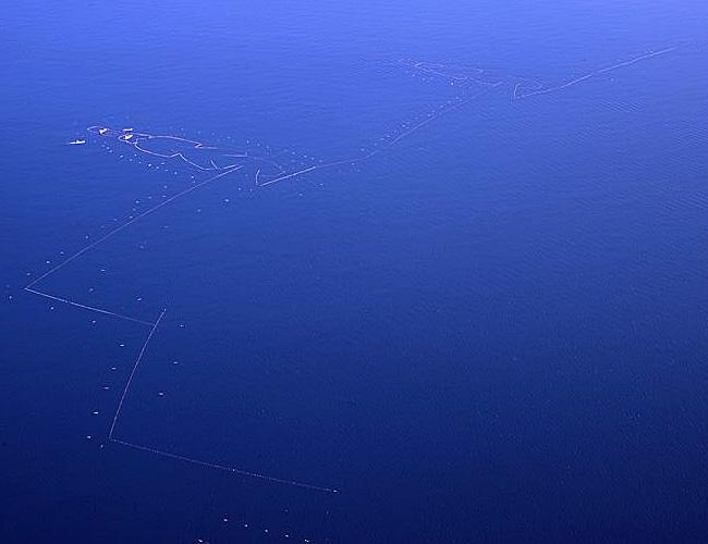 写真:上空から撮影した七尾市沿岸部(富山湾)に敷設された大型定置網